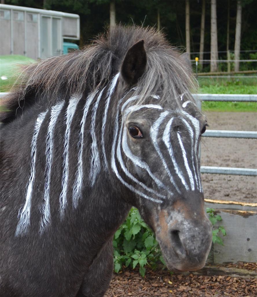 Zebr-Evita