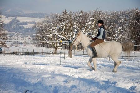 Fiero im Schnee