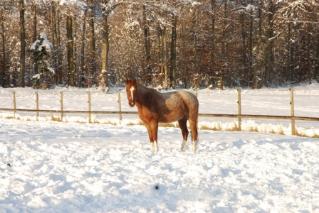 Hattrick geniesst die Wintersonne