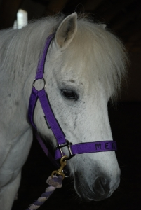 Merlin mit Hoffarbe - violett