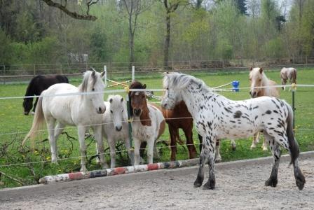 Solero und seine neue Familie